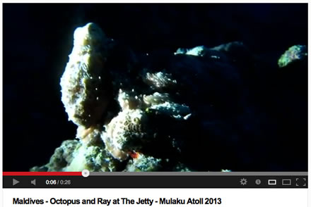 Gabrielle SCUBA YouTube Video Octopus and Ray the Jetty Maldives