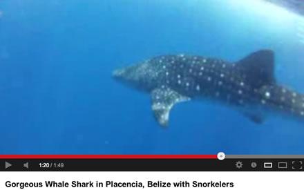 Tallahassee SCUBA Instructor Gabrielle Enjoys Whale Shark in Placencia, Belize